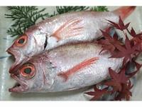 旬のお魚はいつも新鮮
