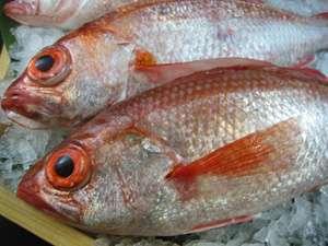 赤い宝石☆幻の高級魚【のどぐろ】