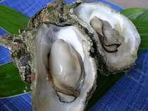 ぷりっぷりの岩牡蠣、美味しいです