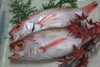 幻の高級魚「ノドグロ」
