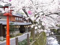 城崎の春~木屋町小路